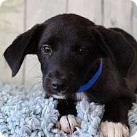 Adopt A Pet :: Malik - Waldorf, MD