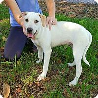 Adopt A Pet :: Moxi - Matawan, NJ