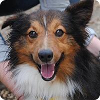 Adopt A Pet :: Kobe - Philadelphia, PA