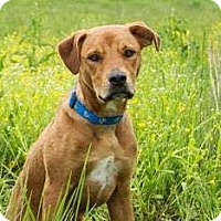 Terrier (Unknown Type, Medium) Mix Dog for adoption in St Paul, Minnesota - Mikko
