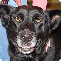 Adopt A Pet :: Zoe - Spokane, WA