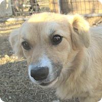 Adopt A Pet :: Jack - Godley, TX