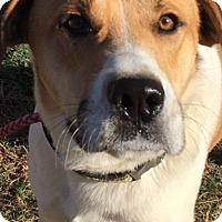 Adopt A Pet :: Monroe - Liberty Center, OH