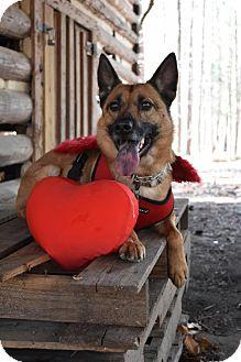 German Shepherd Dog Mix Dog for adoption in Greensboro, North Carolina - Doctor Love