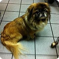 Adopt A Pet :: Pip - Portland, ME