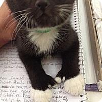 Adopt A Pet :: Alejandro - Byron Center, MI
