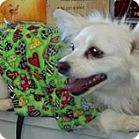 Adopt A Pet :: Blanca ~ Courtesy listing - San Angelo, TX