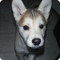 Adopt A Pet :: Cleo - Egremont, AB