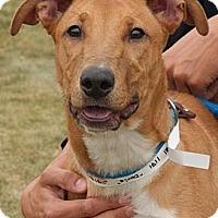 Adopt A Pet :: Doris - Lancaster, OH