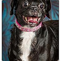 Adopt A Pet :: Edna - Owensboro, KY