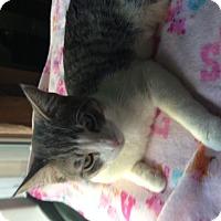 Adopt A Pet :: Ollie - Irvine, CA
