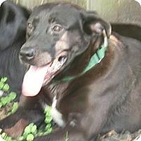 Adopt A Pet :: Freddie ~ New Beginnings - St Petersburg, FL