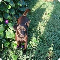 Adopt A Pet :: Tiffany - Rexford, NY