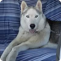 Adopt A Pet :: Ike - Carrollton, TX
