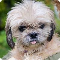Adopt A Pet :: Dexter - Medford, MA