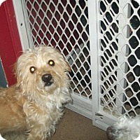 Adopt A Pet :: Watson - Bernardston, MA