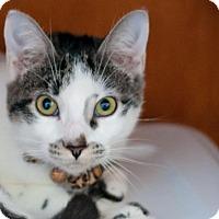 Adopt A Pet :: Marvelina - Santa Rosa, CA