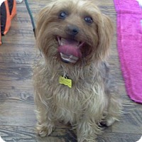 Adopt A Pet :: Fozzy - Encino, CA