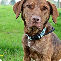 Adopt A Pet :: Reese - Delaware, OH