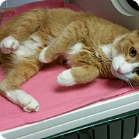 Adopt A Pet :: Tangerine - Staten Island, NY