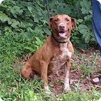 Adopt A Pet :: Fergie - Bardonia, NY