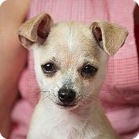 Adopt A Pet :: FAIRY - Pt. Richmond, CA