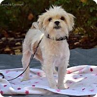 Adopt A Pet :: Mayzie McGrew - Sacramento, CA