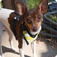 Adopt A Pet :: Abby - Prosser, WA