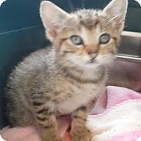 Adopt A Pet :: Keanu - Waupaca, WI