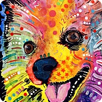 Adopt A Pet :: Gracie - Coming Soon - Palm Coast, FL
