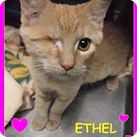 Adopt A Pet :: Ethel - Batesville, AR
