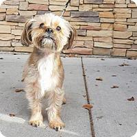 Adopt A Pet :: Oliver Friend - Salt Lake City, UT