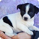Adopt A Pet :: Dalia (3 lb) Video!