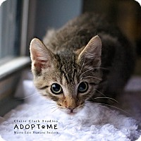Adopt A Pet :: Glen - Edwardsville, IL