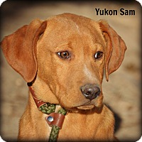 Adopt A Pet :: Yukon Sam - Glastonbury, CT