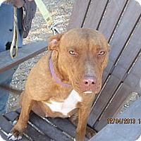 Adopt A Pet :: Tawny - Littlerock, CA