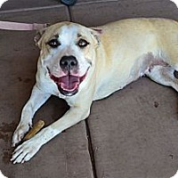Adopt A Pet :: Marilyn - Scottsdale, AZ