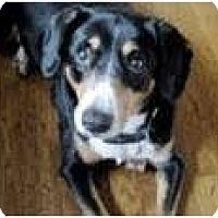 Adopt A Pet :: Jezebel - Seymour, CT