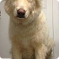 Adopt A Pet :: Diego - Saskatoon, SK