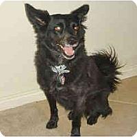 Adopt A Pet :: Rena - Scottsdale, AZ