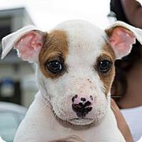 Adopt A Pet :: Eli - Orlando, FL