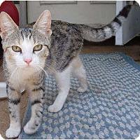 Adopt A Pet :: Roxie - Mooy, AL
