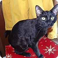 Adopt A Pet :: Bagheera - Riverhead, NY
