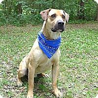 Adopt A Pet :: Homer - Mocksville, NC