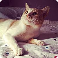 Adopt A Pet :: COLTON - Springfield, PA