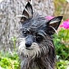 Adopt A Pet :: Haystack - 3.5lbs