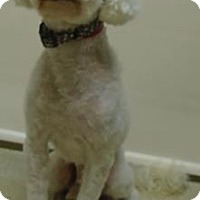 Adopt A Pet :: Claude - Gary, IN