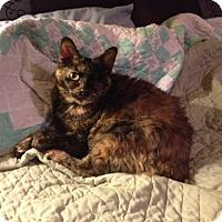Adopt A Pet :: Aurora - Burbank, CA