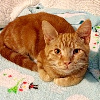 Adopt A Pet :: Devito - Somerset, KY