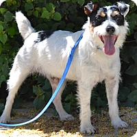 Adopt A Pet :: Bandit - Simi Valley, CA